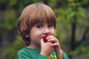 young boy eating a strawberry